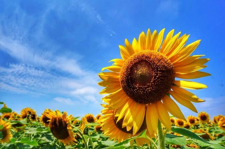 夏の花.jpeg